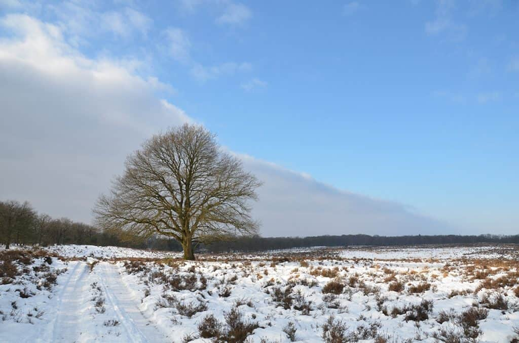 Winter on the Veluwe